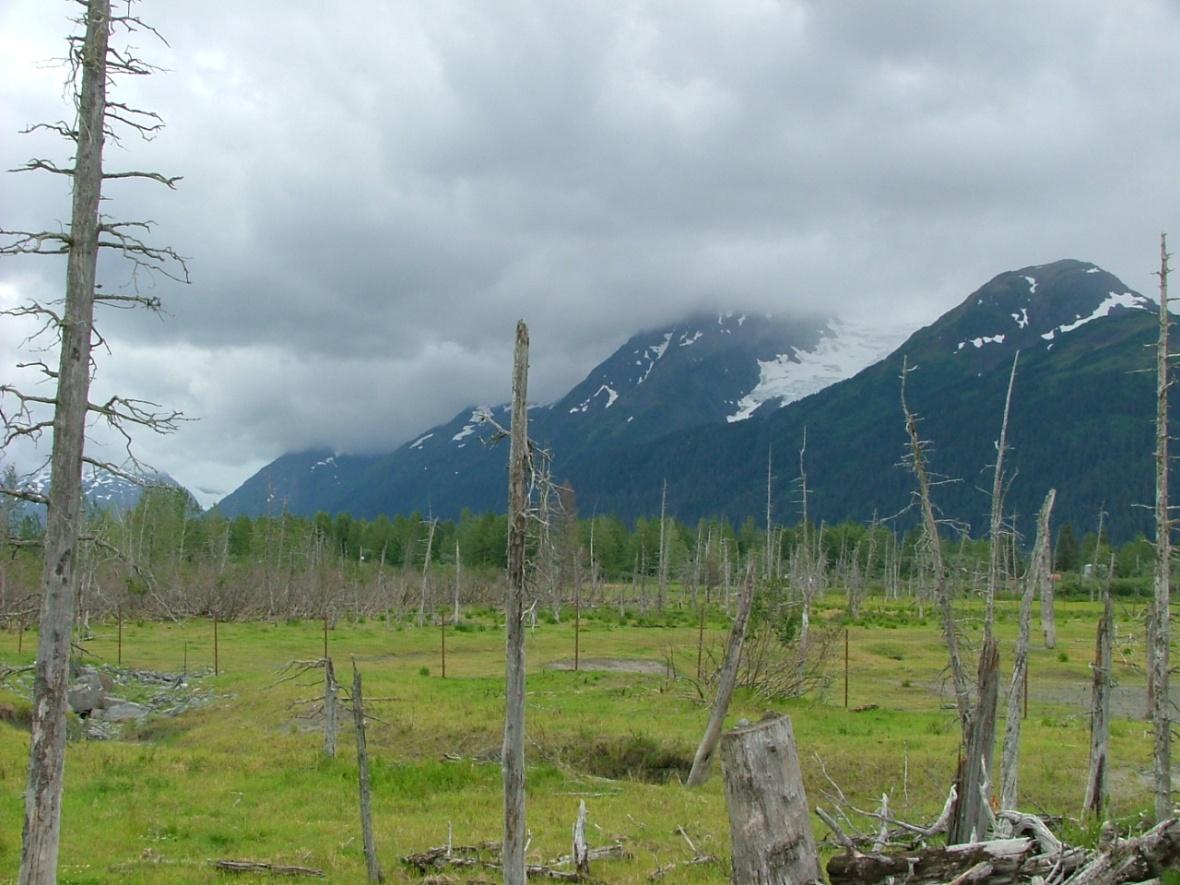 Summer Alaska 022
