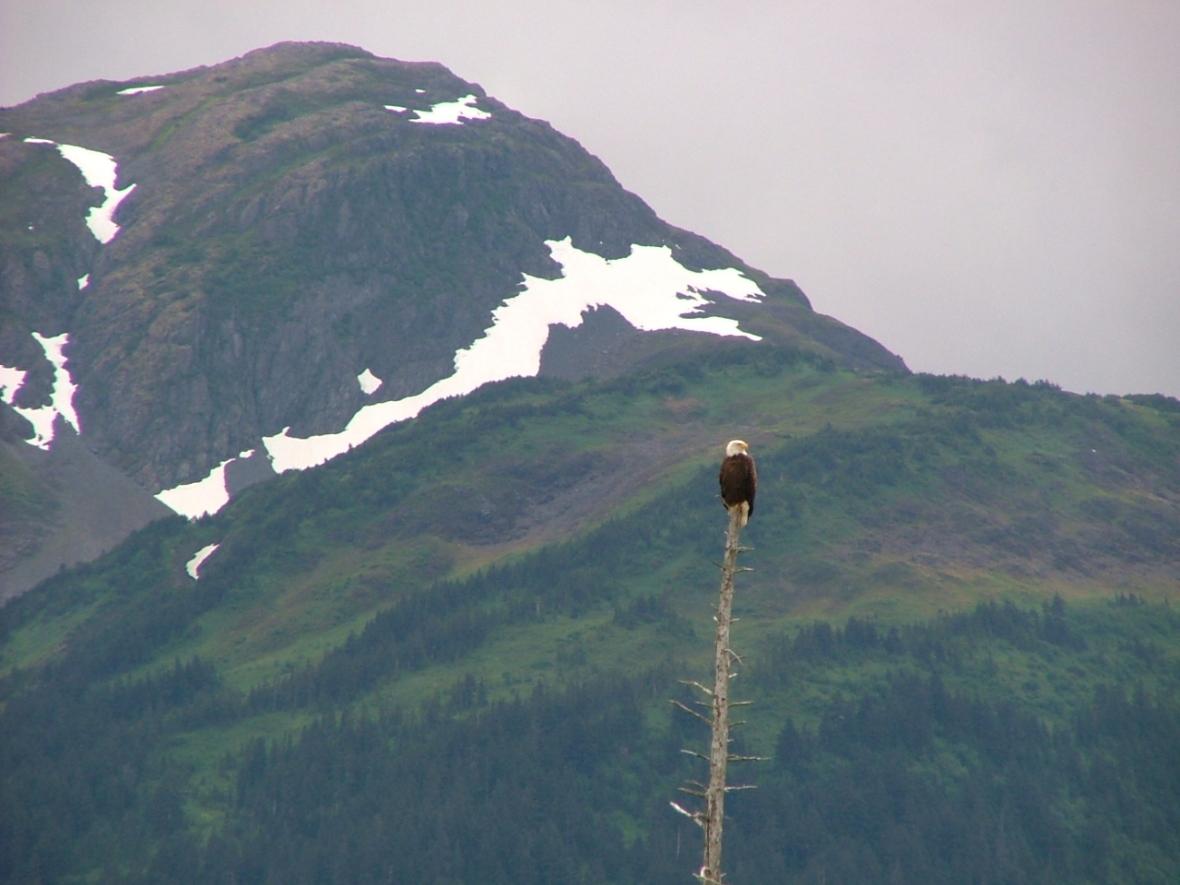 Summer Alaska 040