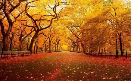 thanksgiving-wallpapers-picture-For-Desktop-Wallpaper